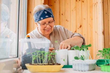 Senior female gardener planting seedlings. Mature woman in glasses caring for sprouts