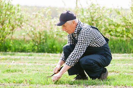 Senior gardener working in garden bed. Aged man in overall and baseball cap. Old smiling farmer. Foto de archivo