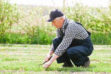 Senior gardener working in garden bed. Aged man in overall and baseball cap. Old smiling farmer. 版權商用圖片