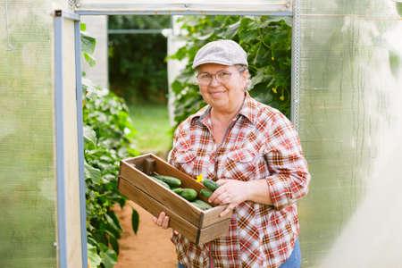 Senior female gardener with box of cucumbers near greenhouse. Mature cheerful farmer.