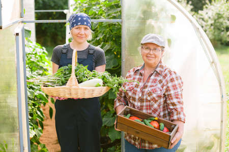 Young and senior female farmers. Mother and daughter near greenhouse with boxes of harvest in hands. Two gardeners.