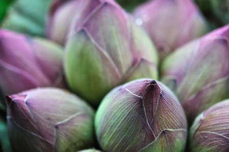 Pink Lotus Bud background at Bangkok Thailand Flower Market Stock Photo
