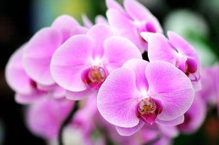 Beautiful purple orchid Standard-Bild