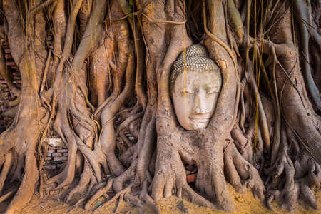 ayutthaya: Unseen Thailand Head of Sandstone Buddha within Tree Roots at Wat Mahathat, Ayutthaya, Thailand  Stock Photo