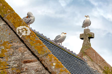 Seagulls on a church roof at Mont Saint Michel, France. One stands on top of the cross, other on the roof ridge.
