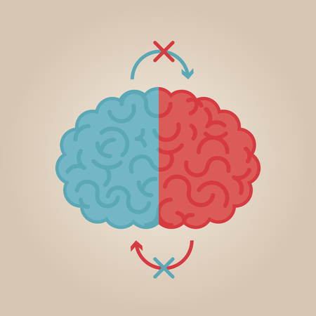 left right: Left & right human brain illustration