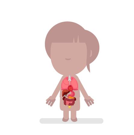 intestino grueso: Anatomía del cuerpo humano ilustración vectorial Vectores