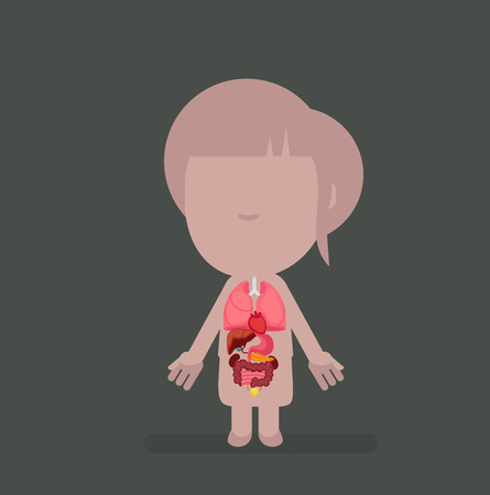 rectum: Human body anatomy vector illustration