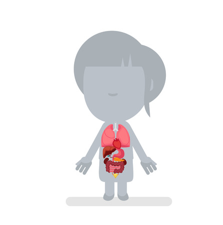 abdomen women: Human body anatomy vector illustration