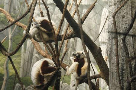 zoo monkeys Stock Photo