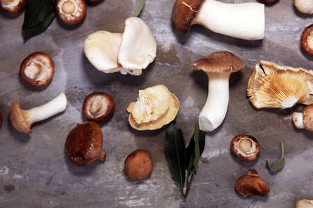 variety of raw mushrooms on grey table. oyster and other fresh mushrooms.