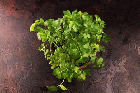 Homegrown and aromatic herb in old clay pot. Set of culinary herb. Green growing parsley. Banco de Imagens
