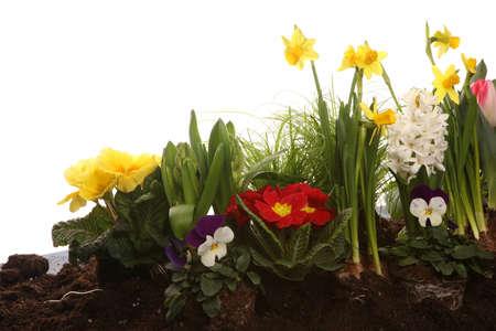 Gardening. Gardener And Flowerpots with beautiful spring flowers