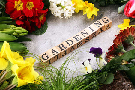 Gardening flat lay wooden letter. Set Of Tools For Gardener And Flowerpots with beautiful spring flowers