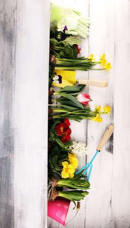 Gardening. Set Of Tools For Gardener And Flowerpots with beautiful spring flowers 版權商用圖片