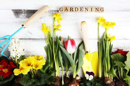 Gardening. Set Of Tools For Gardener And Flowerpots with beautiful spring flowers 写真素材
