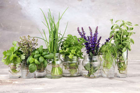 Various Fresh herbs in glasses on a rustic background. Basil, sage, thyme, oregano, dill, chives, parsley and coriander.