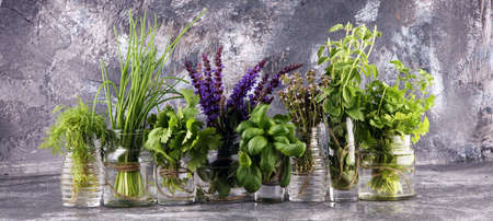 Various Fresh herbs in glasses on a rustic background. Basil, sage, thyme, oregano, dill, chives, parsley and coriander. Reklamní fotografie