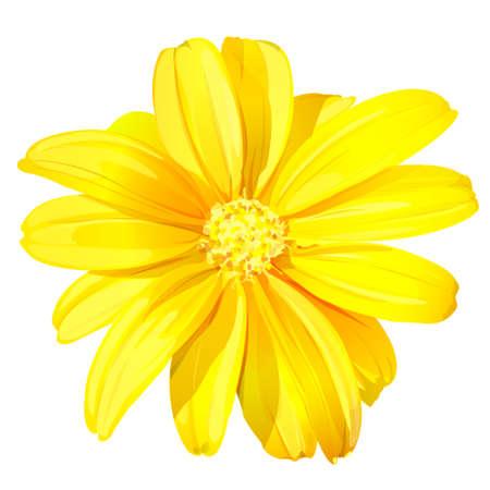Schöne gelbe Blume auf weißem Hintergrund, Vektor-Illustration