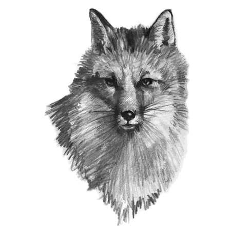 fox fur: Hand drawn fox, vector illustration Illustration