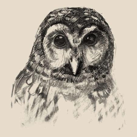 Owl sketch drawn hands, vector illustration Vector