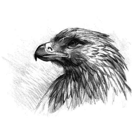 visions of america: Vector sketch of eagle. Hand draw illustration. Illustration