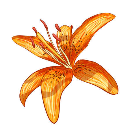 tiger lily: