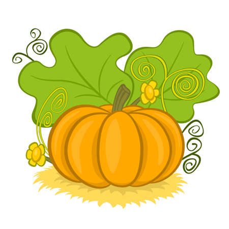 Big pumpkins on hay, with green leaves and curls, vector illustration cartoon Illustration