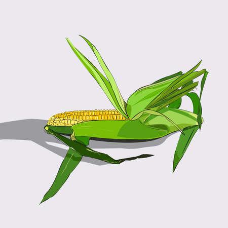 Hand getrokken kleur schets van maïskolf. Vintage gegraveerde illustratie. Botanische maïs. Vegetarisch eten tekenen. Vector illustratie Stockfoto - 104185025