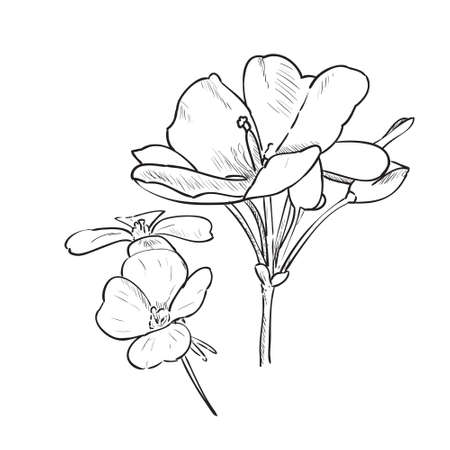 Therapeutic flowers. Hand drawn vector illustration sketch of plant with leaves and flowers isolated on white background.