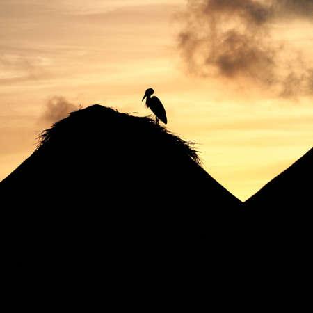 Sunset in Maldives photo