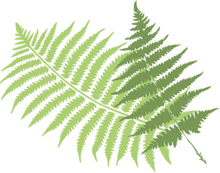 botanical branch: fern leaves Illustration