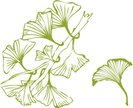 pharmaceuticals: ginkgo leaves