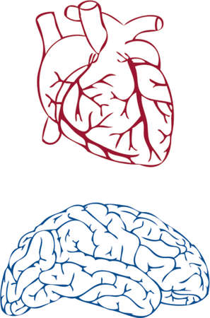 heart and brain Stock Vector - 1200411