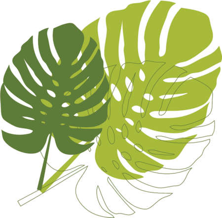 philodendron leaves Vector