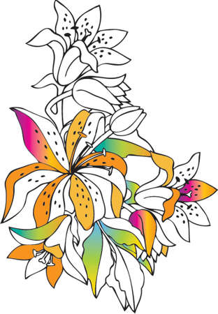 colorful lilies Stock Vector - 1200431