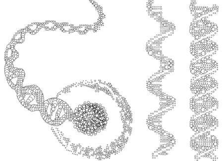 spirale dna: Catene di DNA, illustrazione vettoriale