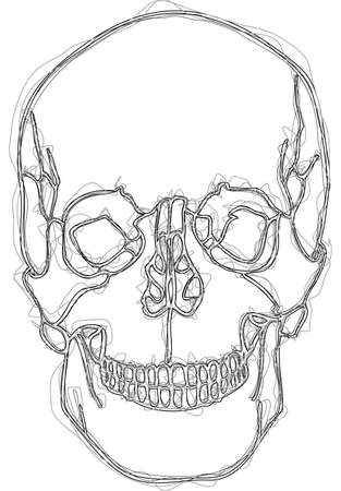 sapience: human skull scribble style drawing Illustration