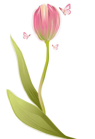 Tulip flower with butterflies, vector  Vector