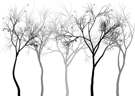 botanical branch: foggy forest, detailed tree silhouettes, vector