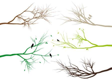 uccelli su ramo: rami di alberi con gli uccelli e le foglie