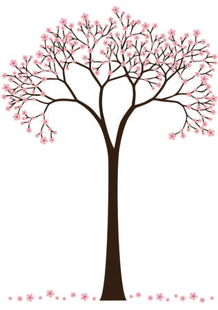 cherry blossom tree: cherry blossom, flowering spring tree Illustration