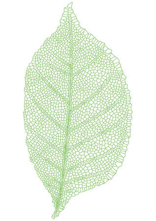 gentle: green leaf with detailed texture, vector Illustration