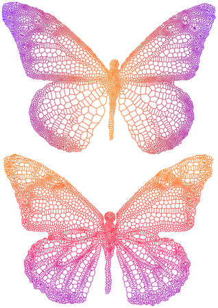 venation: colorful vector butterflies with delicate texture