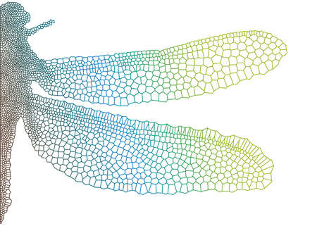venation: dragonfly wing with delicate texture, vector