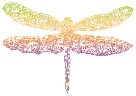 dragonfly wing with delicate texture, vector
