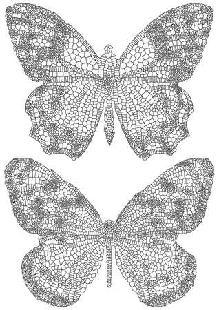 venation: butterflies with detailed delicate texture