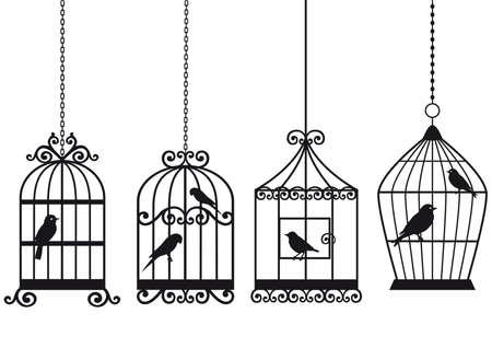 pajaro dibujo: birdcages vintage ornamentales con aves, fondo de vector