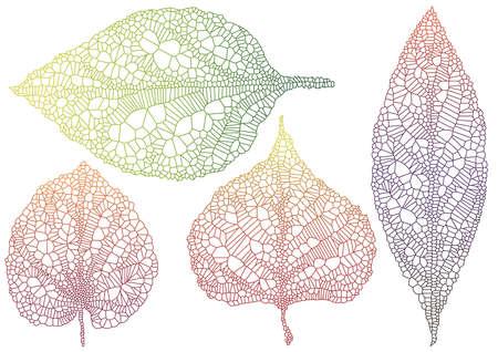 venation: set of textured autumn leaves