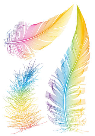 smoothness: set of colorful feather